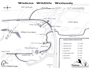 wadena map